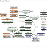 Nehru Family Tree Diagram Sample Template