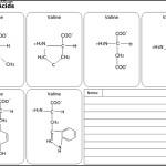 Amino Acids – Biology Diagram Template