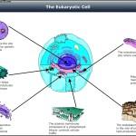Eukaryotic Cell Diagram Template