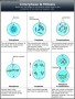 Mitosis Diagram Template